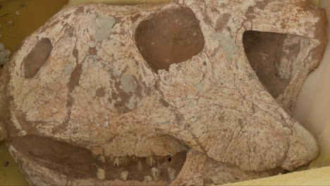 Ancient-Dinosaur-Bones-Are-Preserved-In-Stone-2