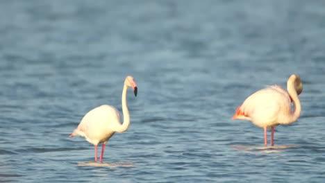 Delta-Flamingos-35