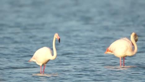 Delta-Flamingos-36