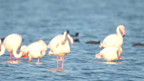 Delta-Flamingos-37