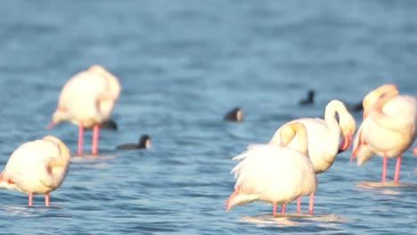 Delta-Flamingos-38