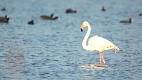 Delta-Flamingos-39