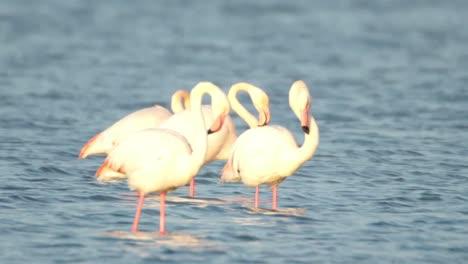 Delta-Flamingos-40