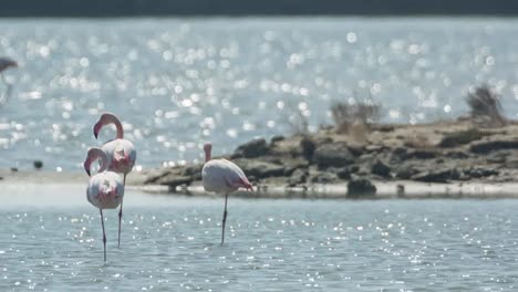 Delta-Flamingos-41