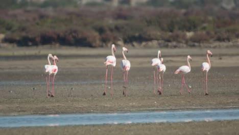 Delta-Flamingos-42