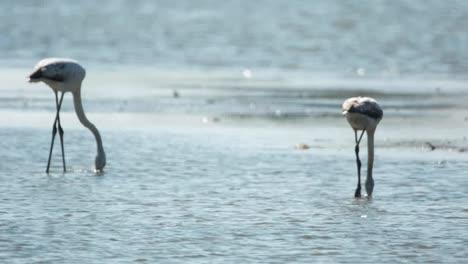 Delta-Flamingos-43