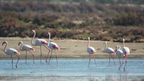 Delta-Flamingos-44