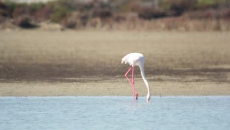 Delta-Flamingos-45