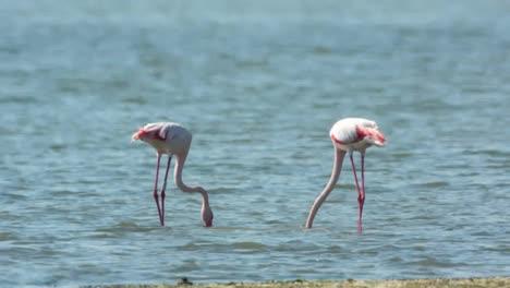 Delta-Flamingos-46