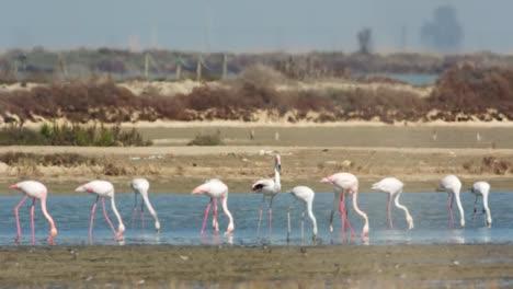 Delta-Flamingos-47