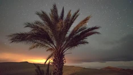 Estrellas-Del-Desierto-00