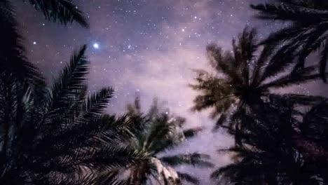 Estrellas-Del-Desierto-03