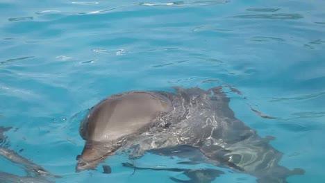 Dolphin-09