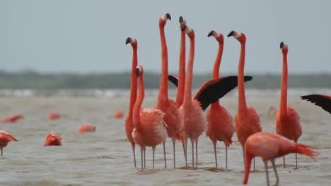 Flamingo-05