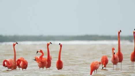 Flamingo-08