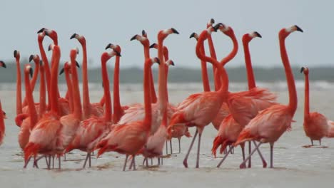 Flamingo-09
