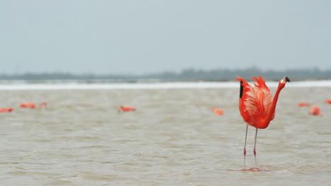 Flamingo-11