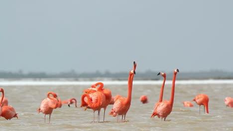 Flamingo-31