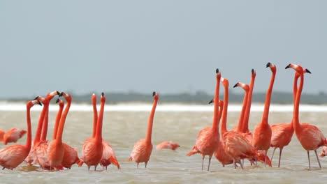 Flamingo-33