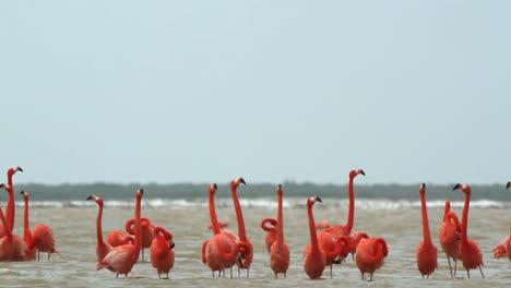 Flamingo-34