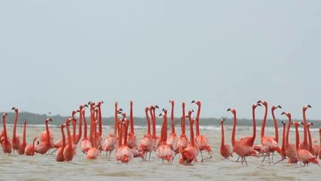 Flamingo-35