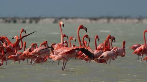 Flamingo-37