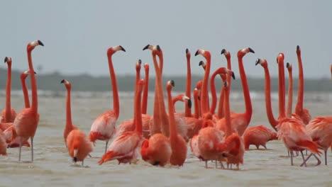 Flamingo-39