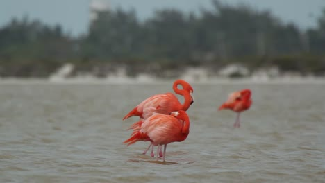 Flamingo-59