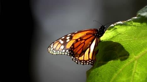 Mariposa-27