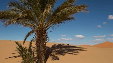 Merzouga-Desert-03