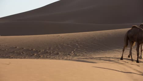 Merzouga-Video-16