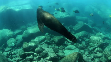 Seal-In-Mexican-Ocean