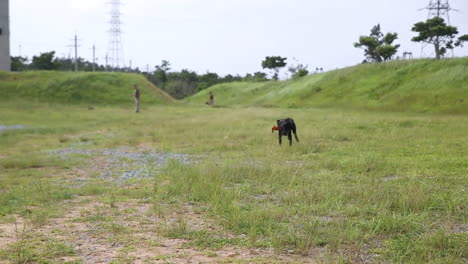 Bomb-Sniffing-Dogs-Are-Trained-By-The-Us-Army-To-Detect-Ied-Roadside-Bombs