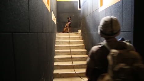 Bomb-Sniffing-Dogs-Are-Trained-By-The-Us-Army-To-Detect-Bombs-In-Terrorist-Hideouts-2
