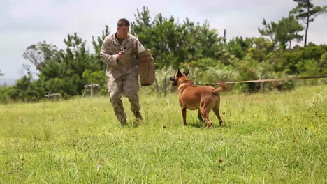 Attack-Dogs-Are-Trained-By-The-Us-Military