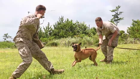 Attack-Dogs-Are-Trained-By-The-Us-Military-1