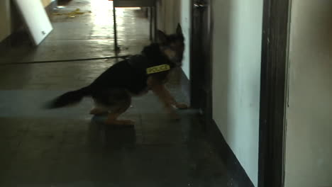 Attack-Dogs-Are-Trained-By-The-Us-Military-3