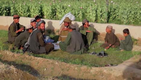 Los-Hombres-Afganos-Cultivan-Amapolas-De-Opio-En-Los-Campos