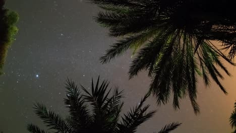 Palm-Tree-Star00