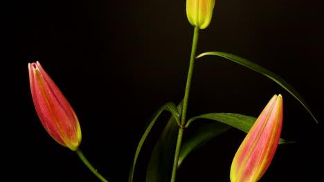 Pink-Flower-01