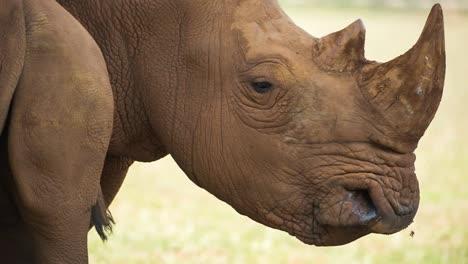 Rhino-03