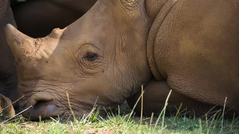 Rhino-05