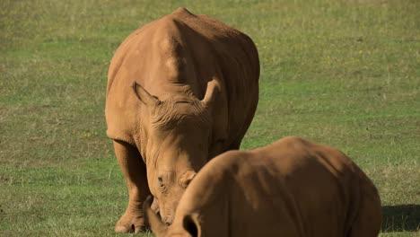 Rhino-10