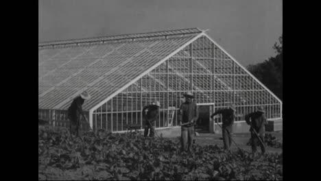 Farming-And-Farm-Labor-In-America-In-1918