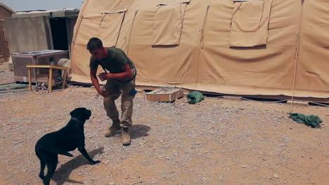 Marinesoldaten-Auf-Patrouille-In-Afghanistan-Verwenden-Bombenspürhunde-Um-Ids-Zu-Entdecken