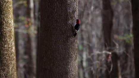 Various-Shots-Of-Kayakers-Paddling-Through-The-Congaree-National-Park-Wilderness-In-South-Carolina-1