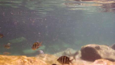 Snorkel-Park-10