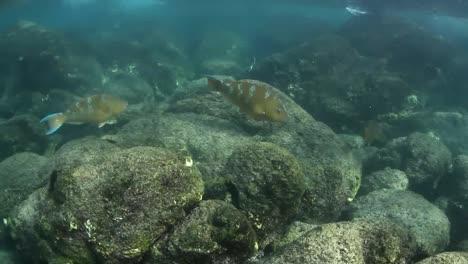 Snorkelling-00