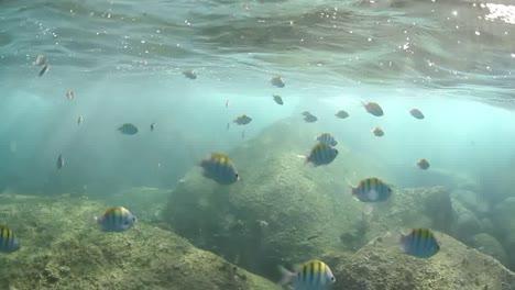 Snorkelling-In-The-Ocean