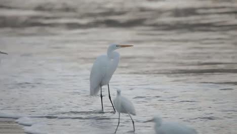 Storks-00